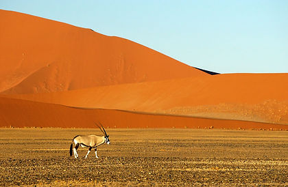 Tucked away in the south-western corner of Africa, Namibia has some of the most stunning landscapes in Africa - the red sands of the enormous dunes at Sossusvlei; the expansive deserts in Damaraland, where desert elephants roam free; the salt pans and water holes at Etosha, home to leopard, black rhino, lions, springbok and oryx.   This tailor-made luxury safari of Namibia has you stay in a private game reserve, exquisite hotels and luxury safari camps, all the while seeing the best of Namibia. As with all our private tours, this sample itinerary can be completely tailored to create the perfect journey of discovery for you.