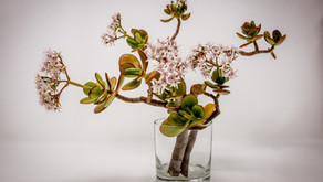 How to meditate with plant in the stunning IKEBANA way