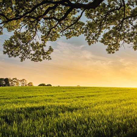 Country Living: Do You Have a Place to Decompress?