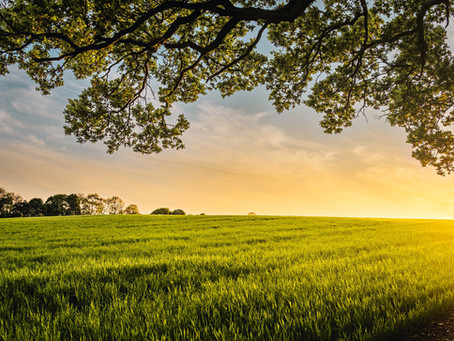 Tax advice for farmers: Lots of goodies hidden in stimulus pack