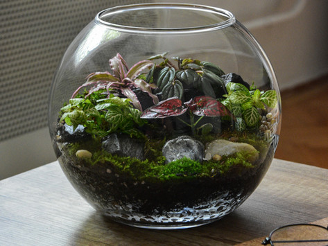 MOSS: The Ultimate High-Vibe & Low-Maintenance Plant for Your Feng Shui Home or Office