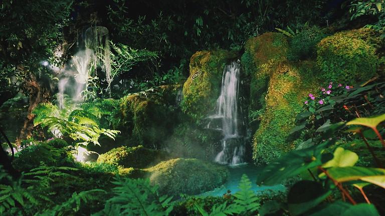 Protecting the Amazon Region: Governance Gaps