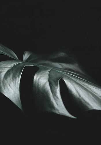 Image by Sigmund