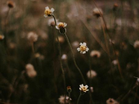 Imperfect Sanctification