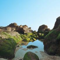 Algues et grandes marées en Bretagne