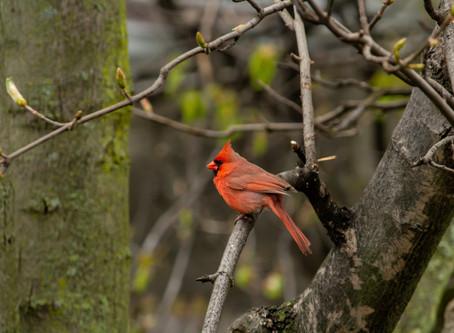 Just Look @ The Birds!
