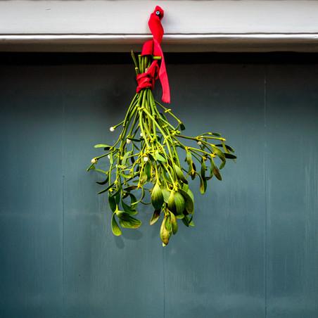 Healthy Life: Mistletoe – Viscum Album