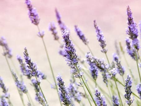 Health Properties of Lavender