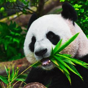 Panda Prayers continued episodes 3 & 4