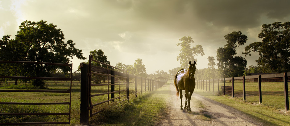 When should you buy a horse?