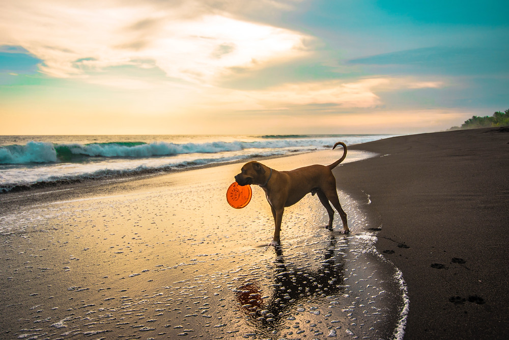 Energieke hond