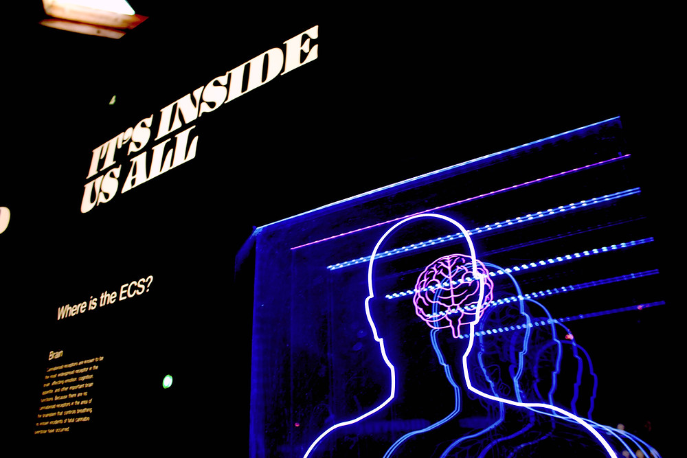 neon sign about the brain