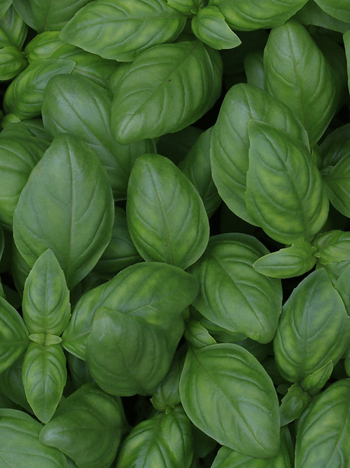 Fines herbes fraîches