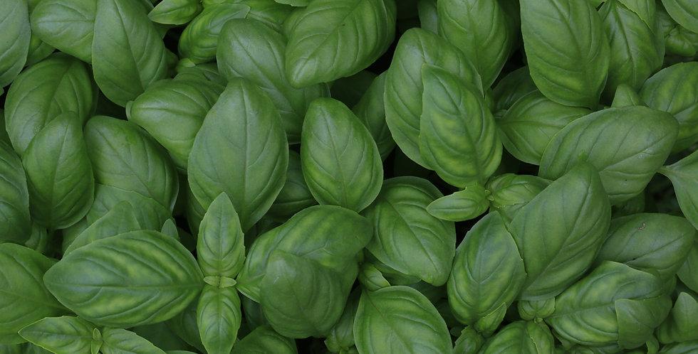 Herbs- Mixed Basil Pack