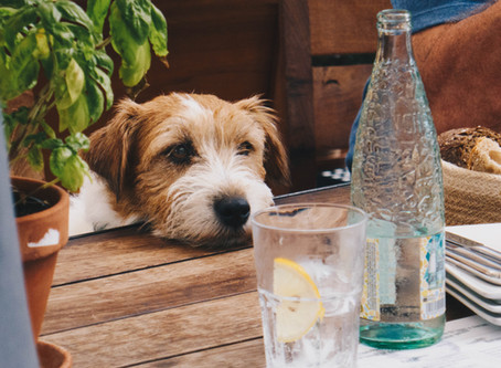 Questions et réponses sur la propreté du chien