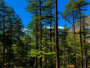 Image by Shrey Solanki