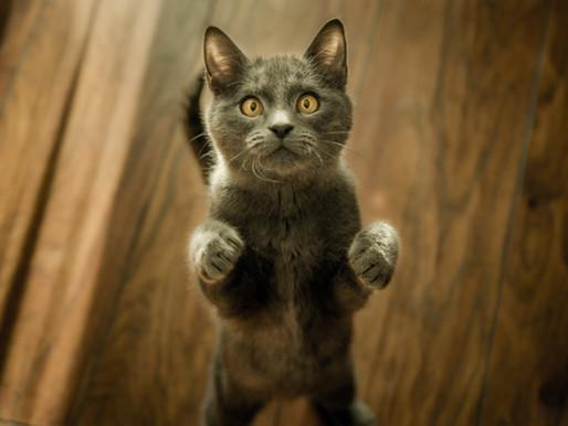 Happy Cat-ember!