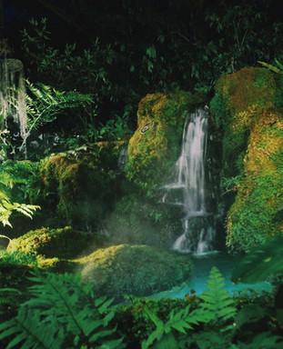 Rainforest Model Building