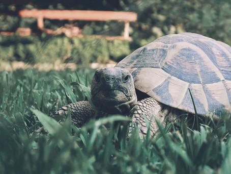 Mediation vs the Turtle Train