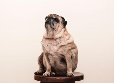 Как дебелите кучета са отражение на затлъстяването при хората