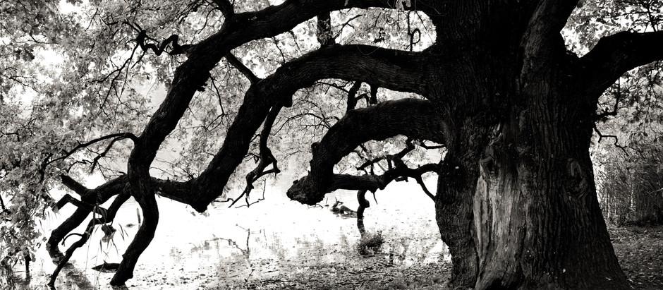 Develop Deep Roots Like the Mighty Oak Tree