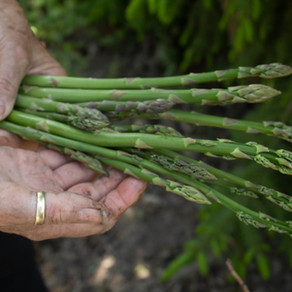 Tid for asparges!