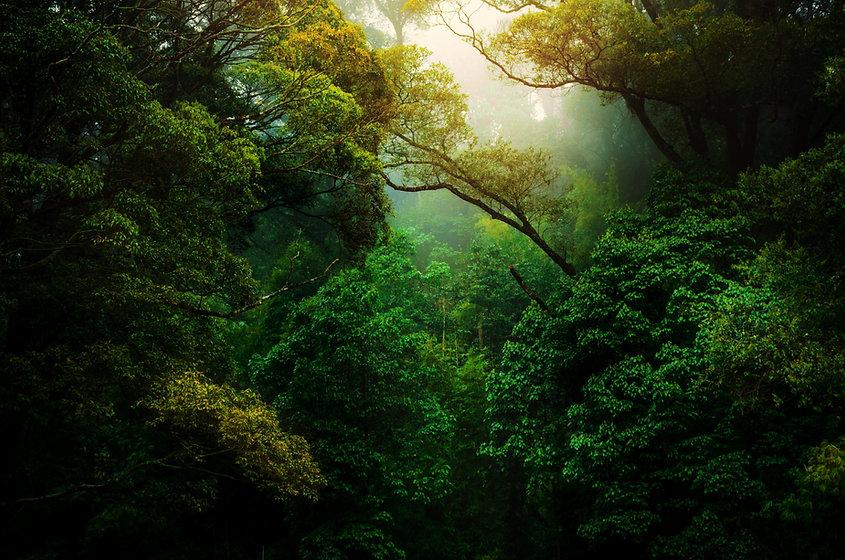 La voie de la nature