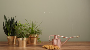7 Great Houseplants For Beginners