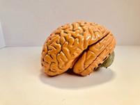 Food for the Brain: Gut Brain Axis