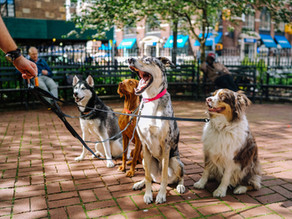 Lack of pet-friendly accommodation is the biggest staycation deterrent