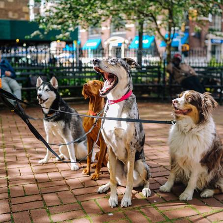 En Sevilen Köpek Cinsleri