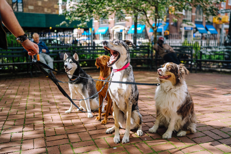 Šunų priežiūros mokymai