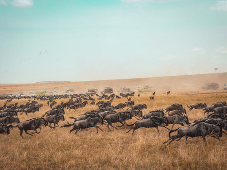 The Great Migration Explained...