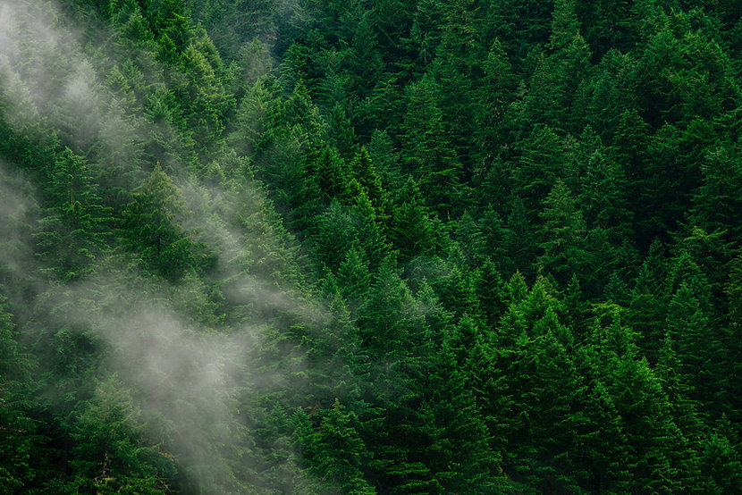 Forum für Wissen 2020: Biodiversität im Schweizer Wald