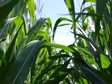 Accommodative SARB and growth rebound positive for the pumping agriculture sector