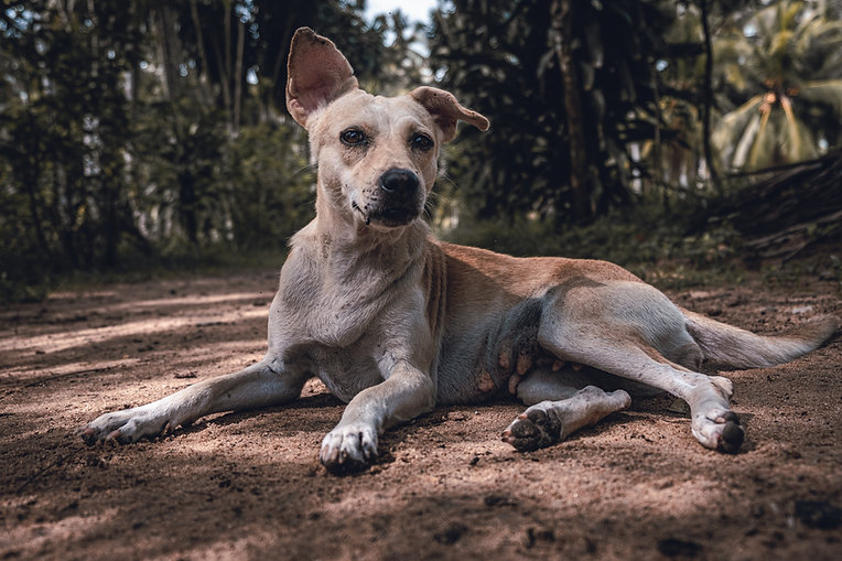Rescue dog looks hopeful at the camera  - Duo Duo Project