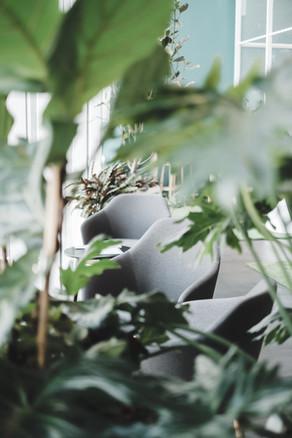 Pflanzen sind wichtig fürs Raumklima. Bringst du deine Pflanze auch mit in die Coworkerei?