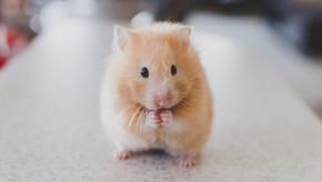 Cuando un ratón te paraliza