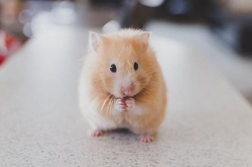 hamster vet near me