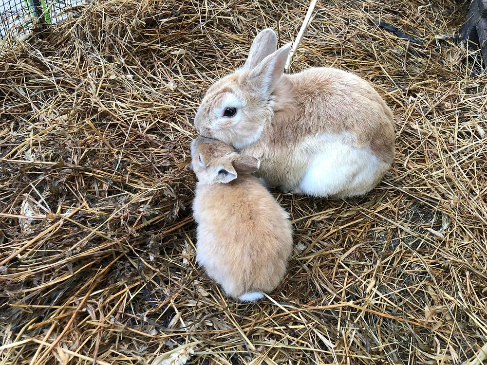 bunnies on hay