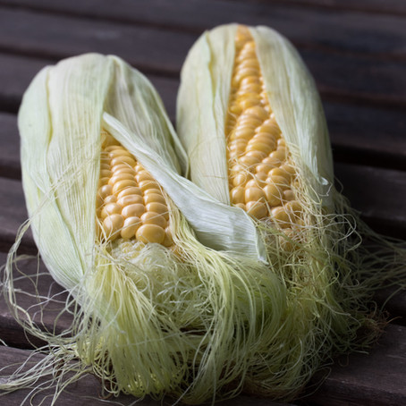 Nixtamal: The Process of Making Corn Digestable and Nutritious