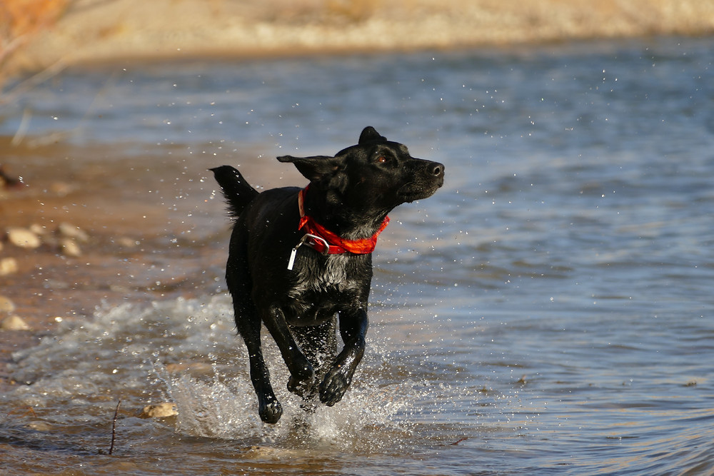 active dog on joint supplements