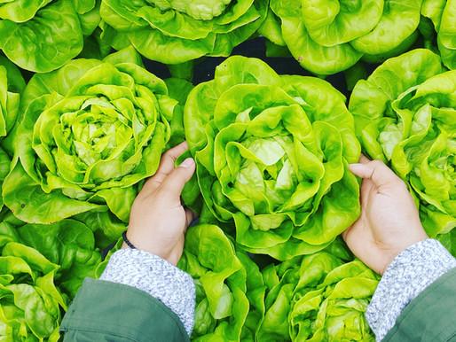 Organic vs Science Based Farming & Gardening