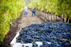 Bild von Lasseter Winery