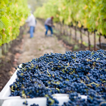 Corley Family Vineyards
