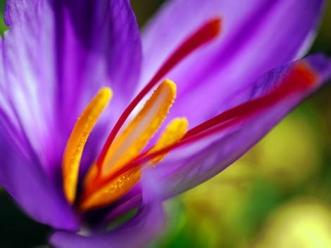 COULD SMELLING SAFFRON HELP WITH DEPRESSION?