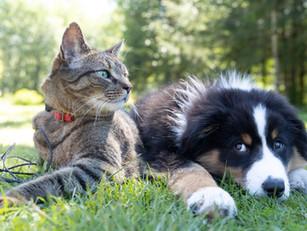 [IET®系列] 寵物IET®官方證書課程 IET® for Pets