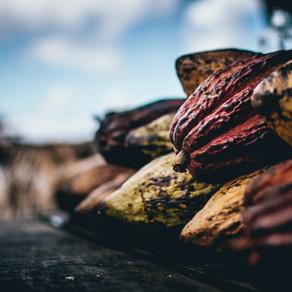 Savory Cacao: Xocolatl Recipe