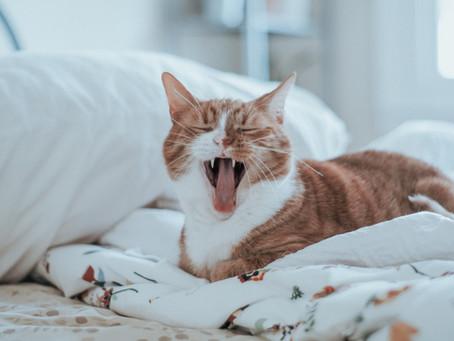 Was will mir meine Katze sagen?