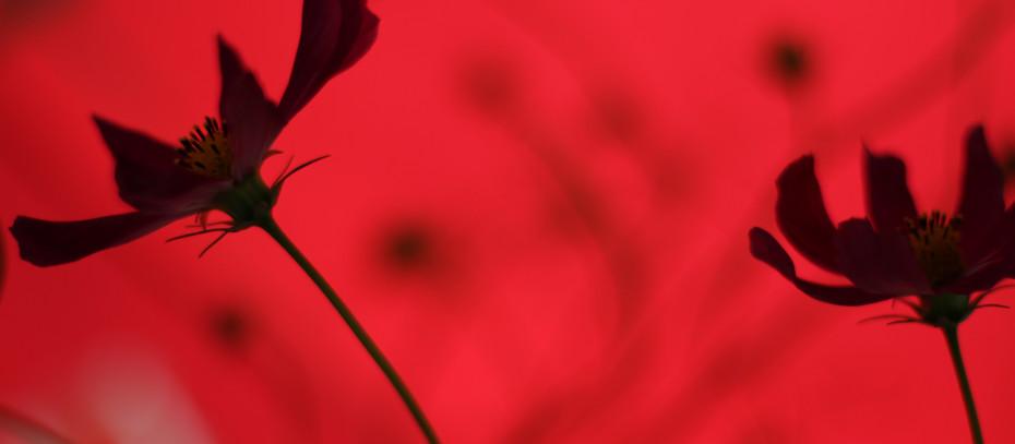 Öykü- Arzu Armağan Akkanatlı- Kırmızılı Türkü